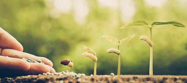 Gemüse aussäen im März