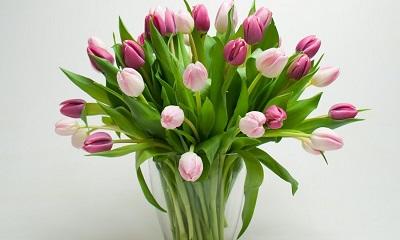 Tulpen sind als Frühlingsdeko sehr beliebt