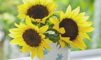 Sonnenblumen als Sommerdeko