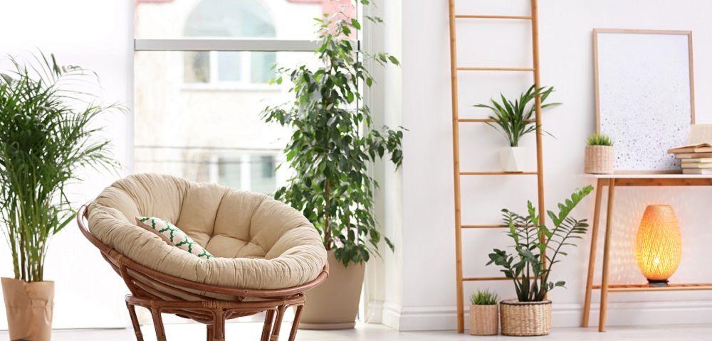 Zimmerpflanzen zur Raumgestaltung, Standort, Pflege