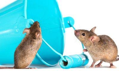 Mäuse schauen in einen Eimer