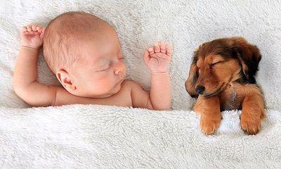Baby und Hundewelpe schlafen in frisch gewaschener Bettwäsche